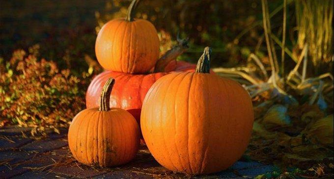 Хэллоуин— праздник сдвойным дном