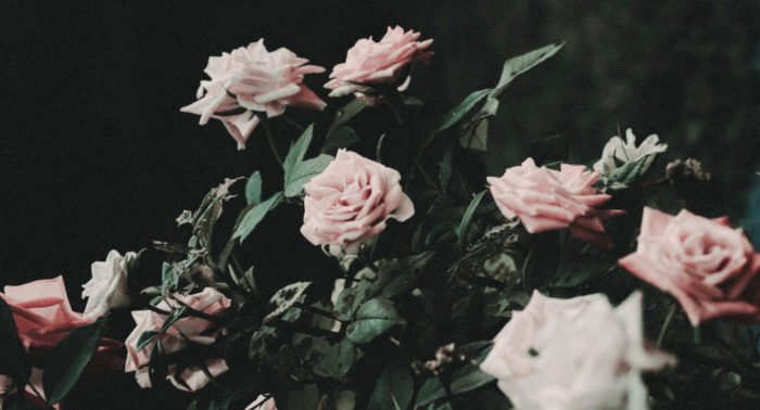 Бабушка, послушная цветку