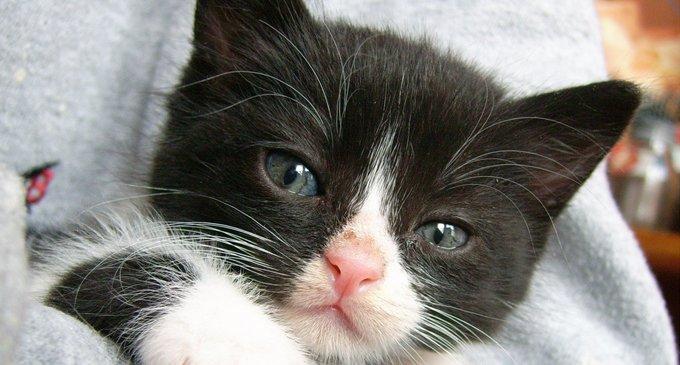 Грех ли любить животных больше, чем людей?