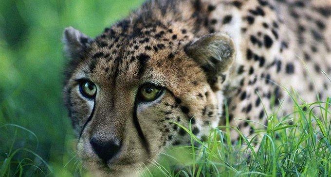За 40 лет число диких животных на Земле уменьшилось вдвое