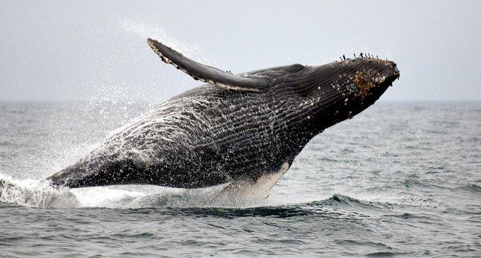 Церковь учила, что земля стоит на трех китах?