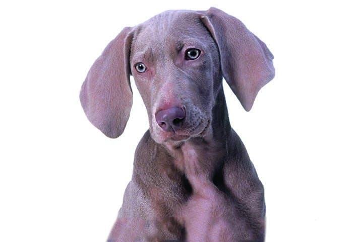 Если человек — образ Божий, значит ли это, что он может пренебрежительно относиться к животным?
