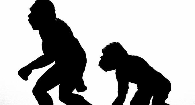 Говорят, что теория эволюции не противоречит христианскому учению о человеке?