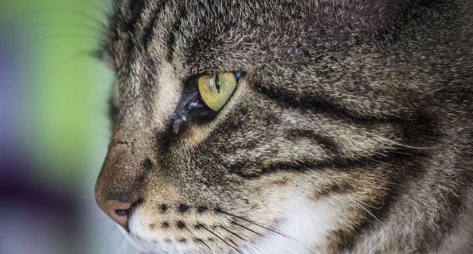 Можно ли назвать кошку или собаку человеческим именем?