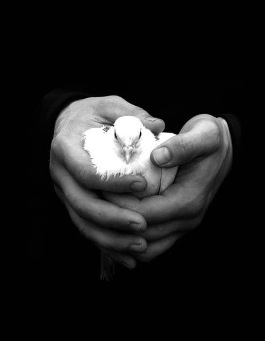 В руках монаха