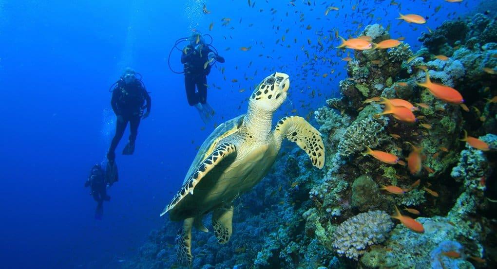 За последние 30 лет морских животных стало в два раза меньше