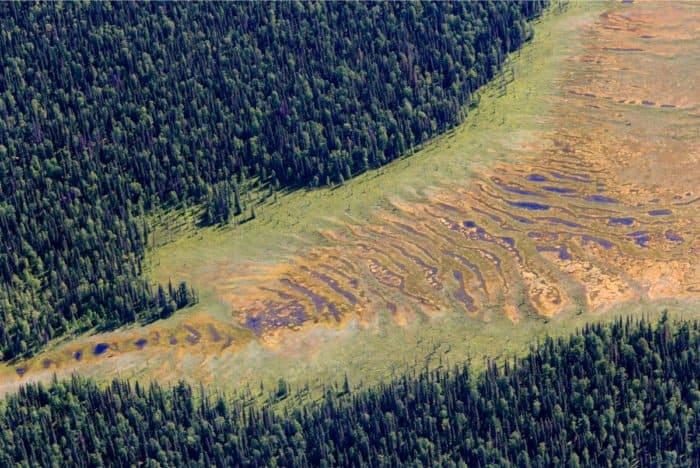 Болото на краю тайги, Республика Коми. Фото Сергея Фомина