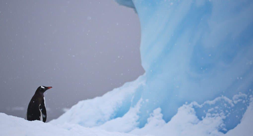 Ледяные дорожки