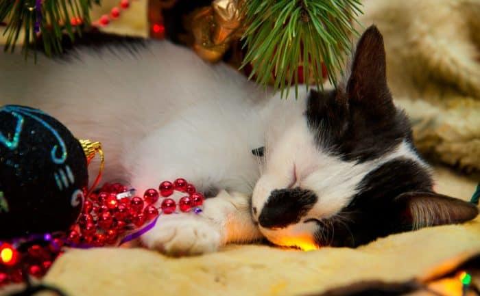 Рождественские фотофестивали