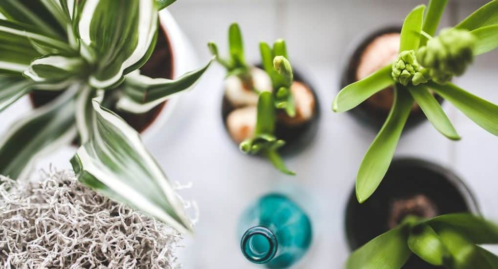 Можно ли полить цветы крещенской водой?