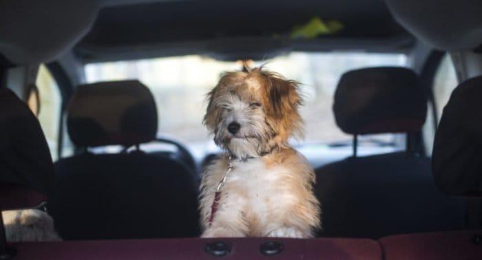 Грех ли перевозить собак в освященной машине?