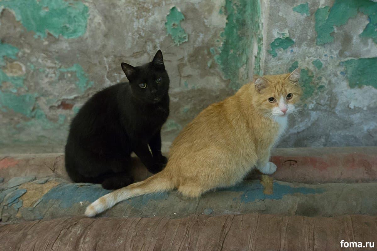 Кот главный в Эрмитаже