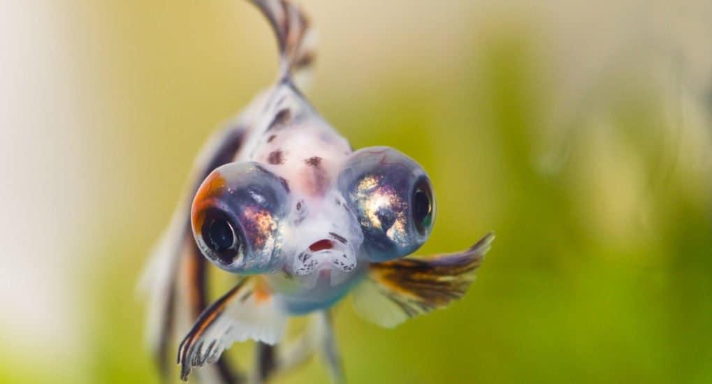 Когда можно есть рыбу в Великий пост 2021 года