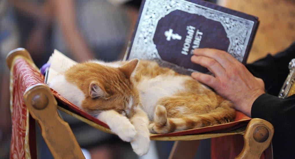 Коты в церкви: в Подмосковье отслужили необычный молебен