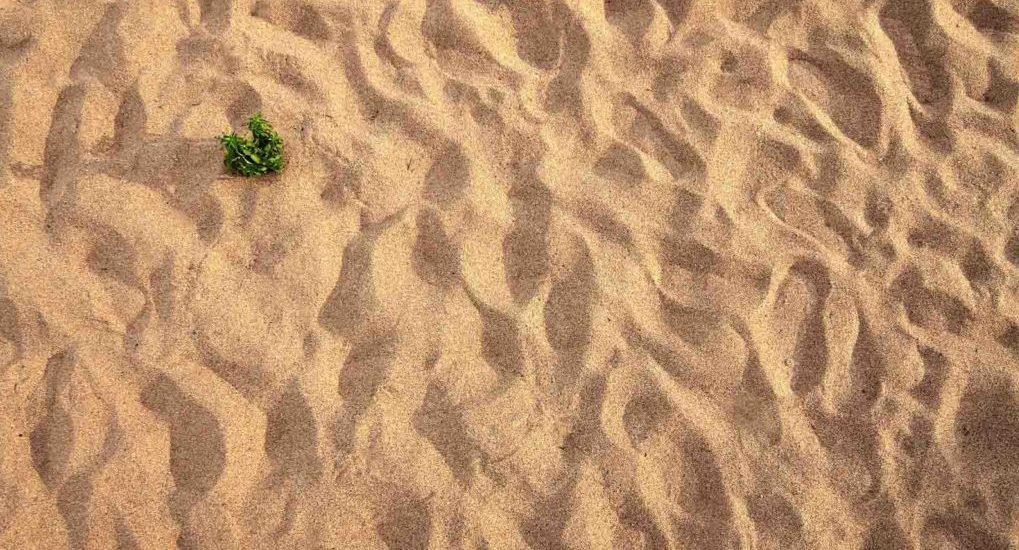 В чем подвиг пустынников?