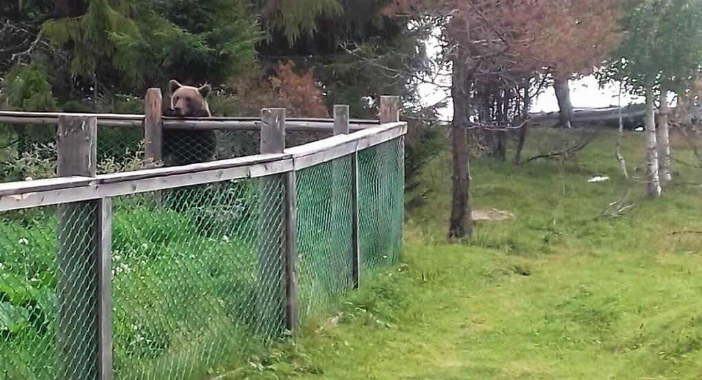 Проголодавшийся медведь забрел в православную пустынь в Карелии