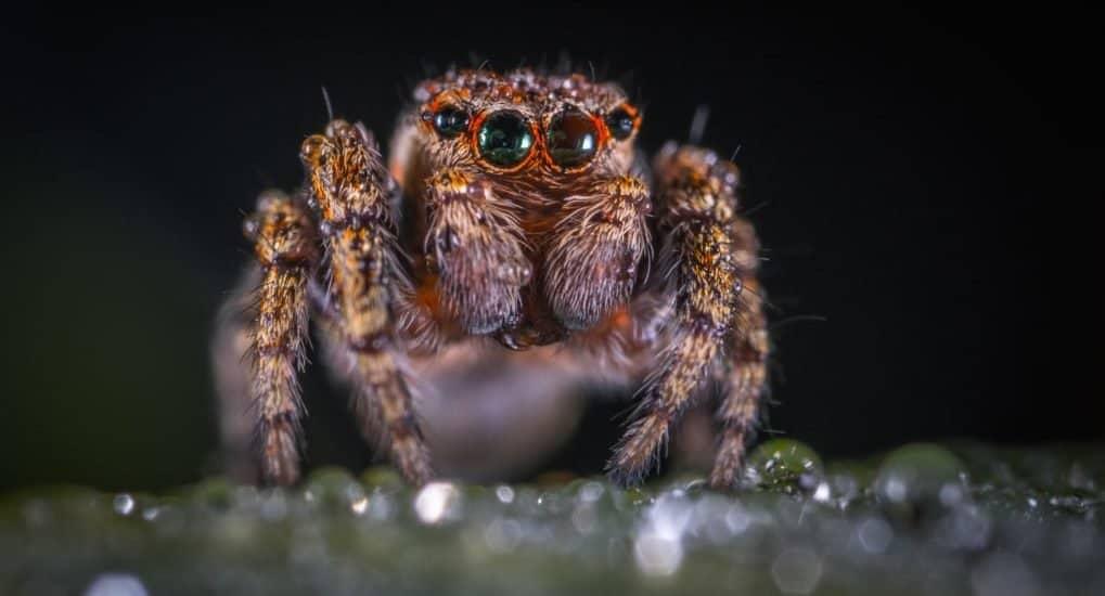 Убить паука - к беде?
