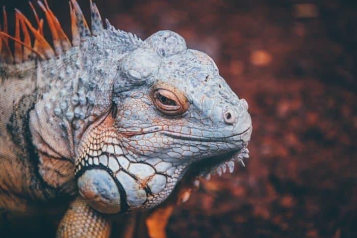 В Библии упоминаются драконы. Это кто? Динозавры?