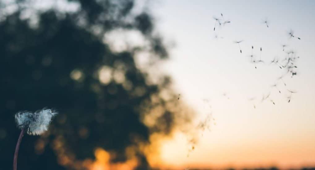 Какое благо больше - земная жизнь или вечная?