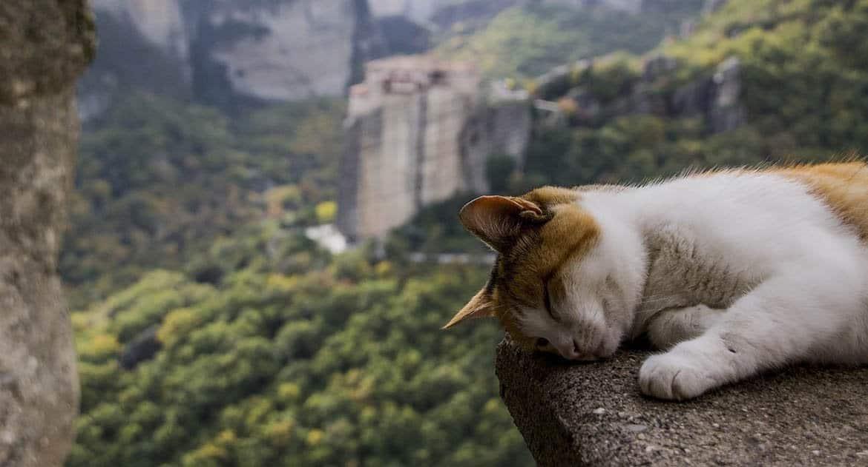Один батюшка сказал, что собака это нечистое животное и ее в храм пускать нельзя, а кошку можно. Почему так? Священник о...