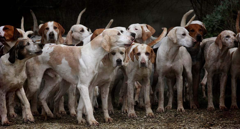 Как выйти из конфликта с соседкой насчет собак?