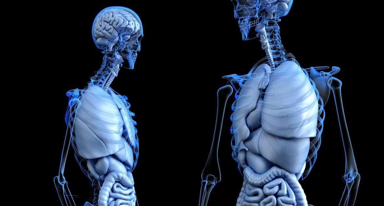 СКР проверит выставку человеческих тел, которую ранее в Церкви назвали неприемлемой