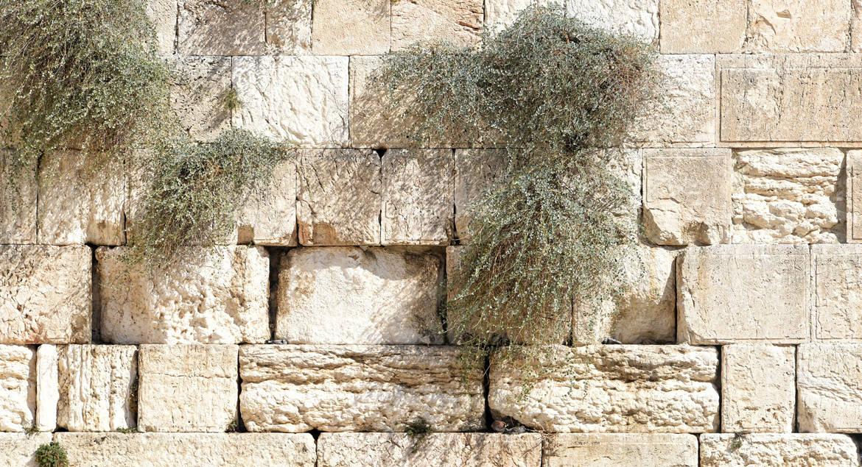 «Потерянный» фрагмент стены в Иерусалиме: как открытие археологов превратило обычные руины в важных свидетелей событий В...