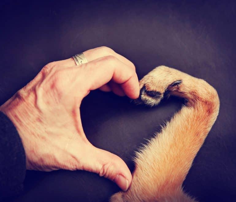 Есть ли у животных бессмертная душа и можно ли за них молиться?